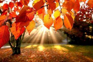117240688_large_autumn